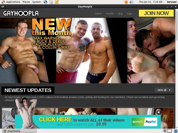 Gay Hoopla Active Password